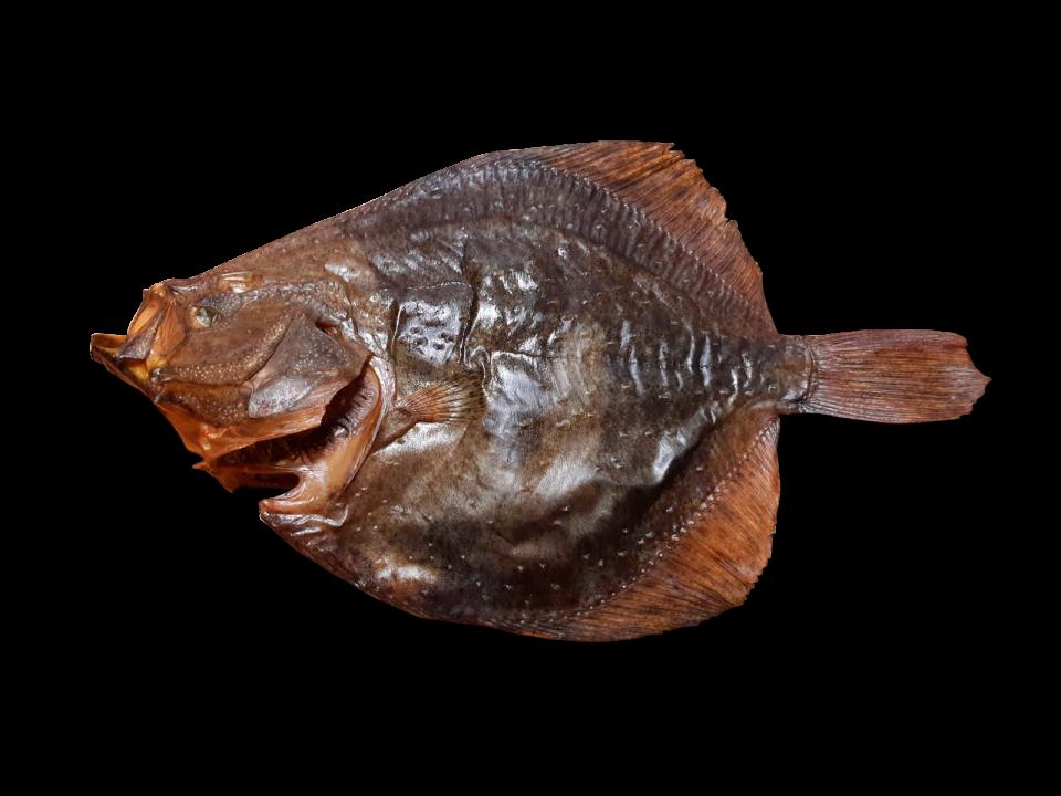 Cold smoked flounder