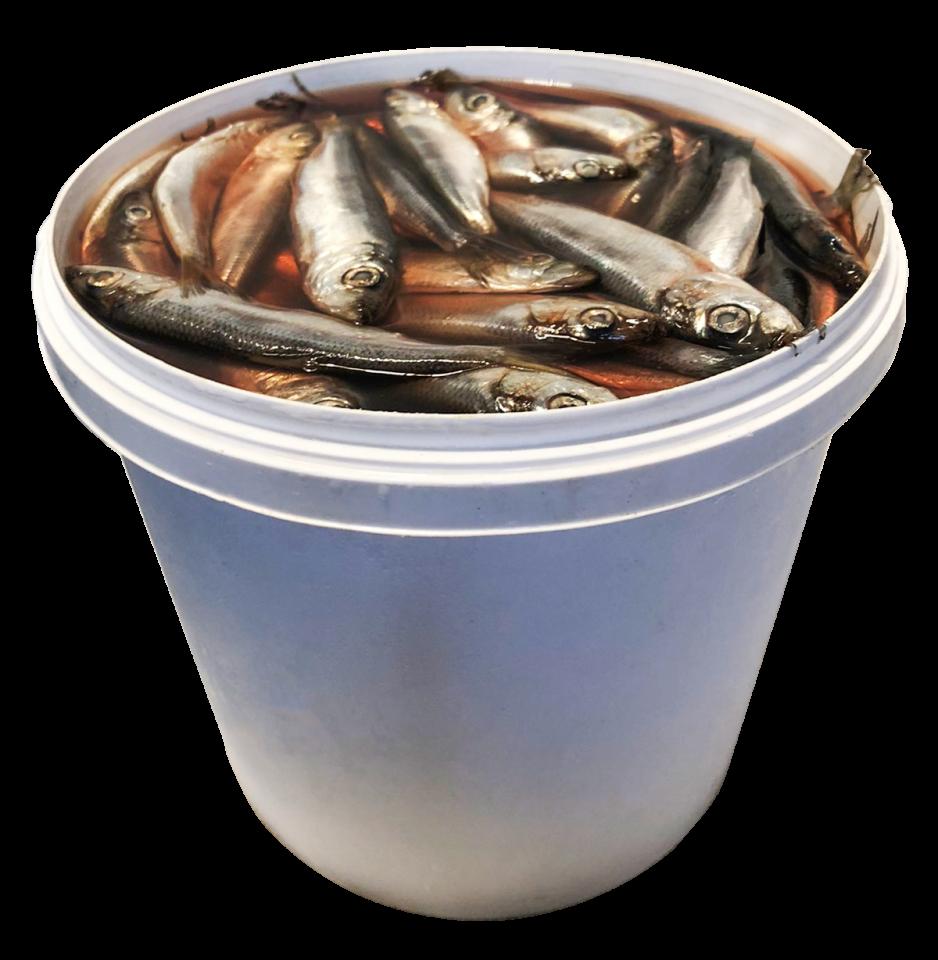 Salted Baltic herring