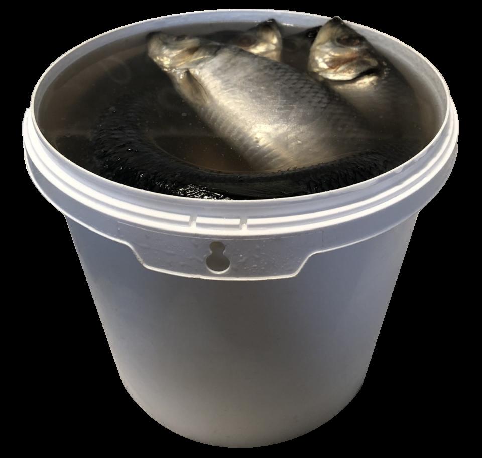 Salted Herring 350+, 450+